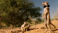 دانلود-مستند-BBC-Animals-with-Cameras