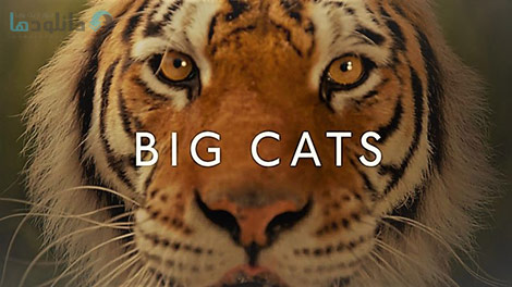 دانلود-مستند-BBC-Big-Cats