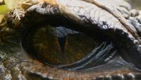 دانلود-مستند-BBC-Attenborough-and-the-Sea-Dragon