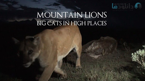 کاور-Mountain-Lions-Big-Cats-in-High-Places
