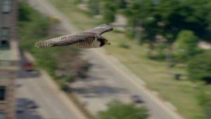 اسکرین-شات-Super-Fast-Falcon