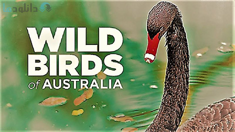 کاور-مستند-Wild-Birds-of-Australia