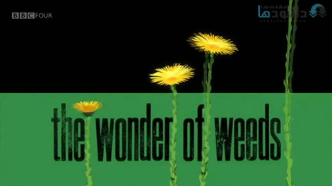 کاور-The-Wonder-of-Weeds