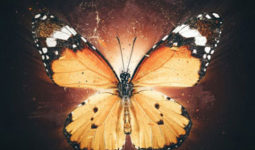 آلبوم-موسیقی-metamorphosis-music-album