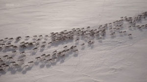 اسکرین-شات-All-Aboard-The-Great-Reindeer-Migration