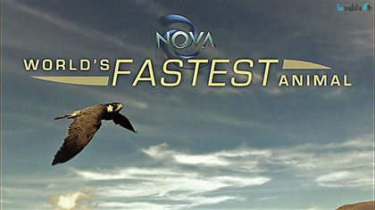 دانلود-مستند-NOVA-Worlds-Fastest-Animal-2018