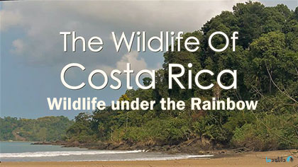 دانلود-مستند-Costa-Rica-Wildlife-under-the-Rainbow