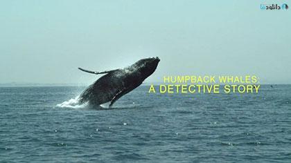 دانلود-مستند-Humpback-Whales-A-Detective-Story-2019