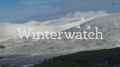 دانلود-مستند-Winterwatch-2019