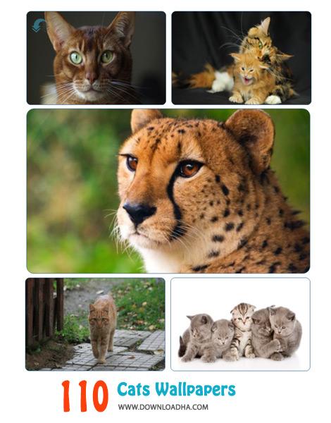 کاور-والپیپر-گربه