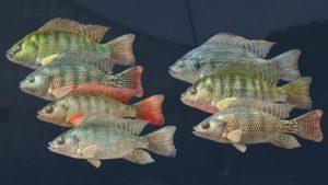 اسکرین-شات-Ultimate-Fishing-Simulator-Kariba-Dam