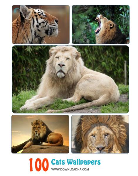 کاور-والپیپر-گربه-سانان