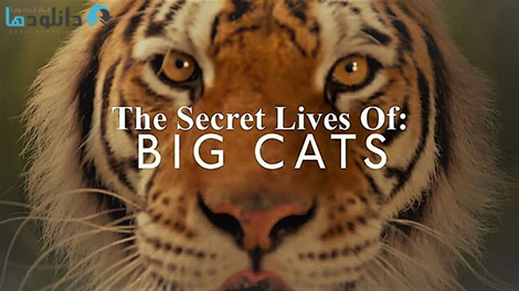کاور-The-Secret-Lives-of-Big-Cats-2019