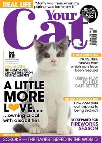 مجله-Your-Cat